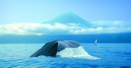 pico-whale
